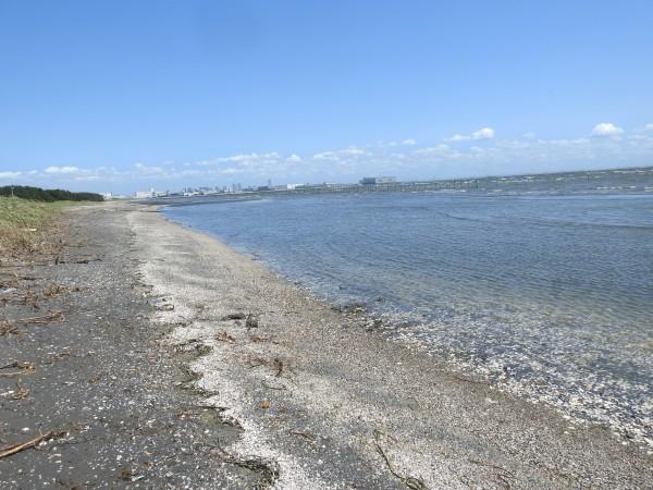 コアジサシの生息地 ふなばし三番瀬海浜公園