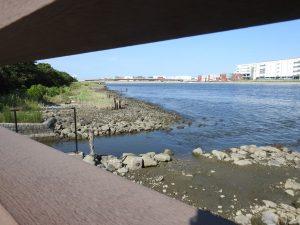 チュウシャクシギの生息地 東京港野鳥公園