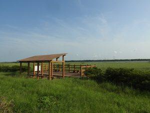 コヨシキリの生息地 コジュリン公園