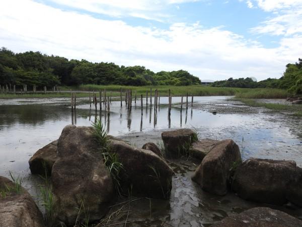 キアシシギの生息地 葛西臨海公園