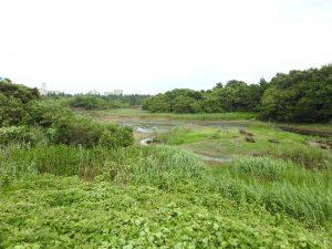 東京都 ツバメ 葛西臨海公園
