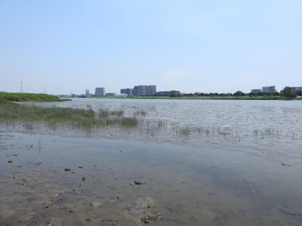 六郷水門 干潟