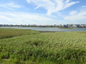 オオヨシキリの生息地 多摩川河口付近