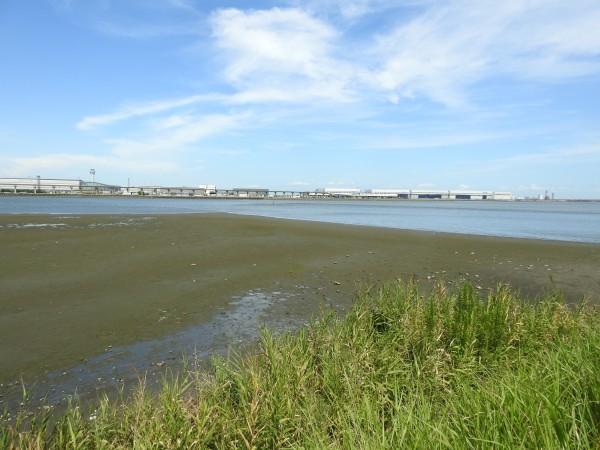 キアシシギの生息地 多摩川河口付近