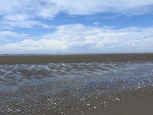 キアシシギの生息地 小櫃川河口