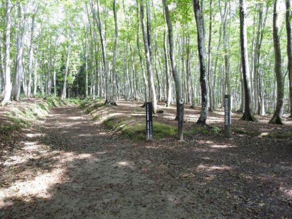 美人林で見られる野鳥と観察ポイント