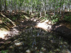 美人林で見られる野鳥と観察ポイント 美人林