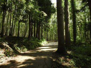 松之山 美人林 ノジコ