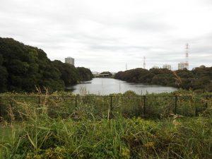 シメの生息地 北総花の丘公園
