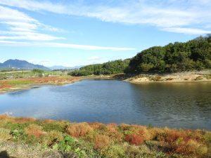 ガビチョウの生息地 丹生湖
