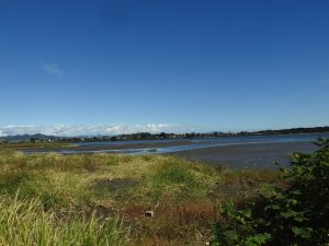 多々良沼で見られる野鳥と観察ポイント 弁財天