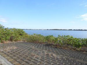 ササゴイ 渡良瀬遊水地 谷中湖