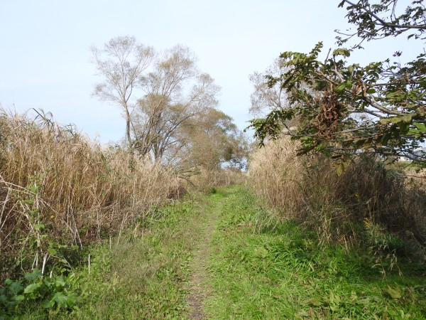 ベニマシコの生息地 ふれあい松戸川