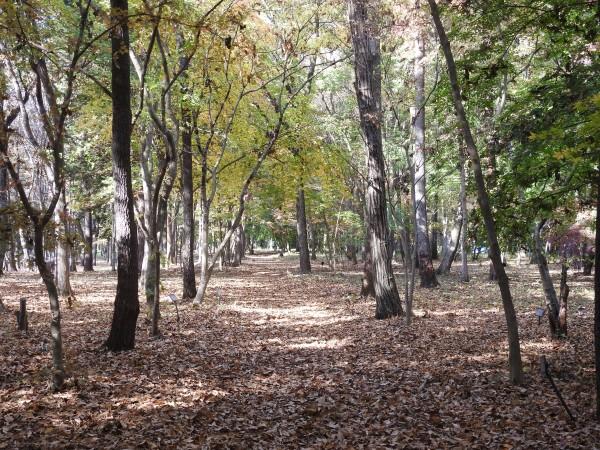 ビンズイの生息地 井頭公園