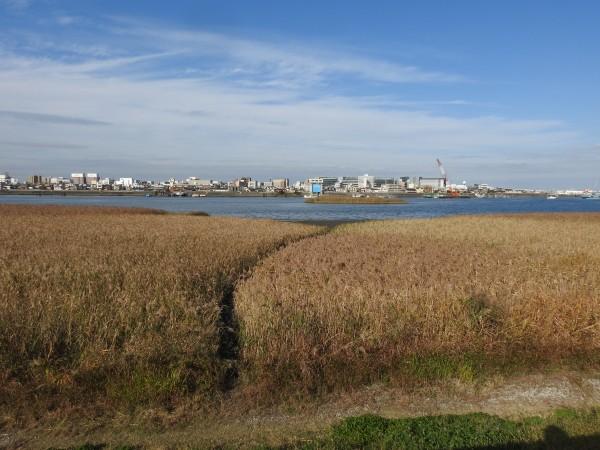 冬の猛禽類の観察におすすめの探鳥地 多摩川河口付近