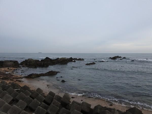 ウミアイサの生息地 平磯海岸