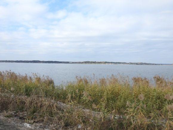 ハヤブサが見られる生息地 涸沼