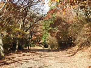 シロハラの生息地 小木津山自然公園