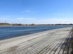 彩湖 ミコアイサ