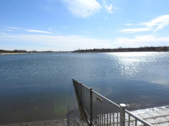 彩湖で見られる野鳥と観察ポイント