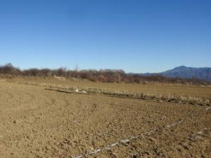 キジの生息地 野辺山高原