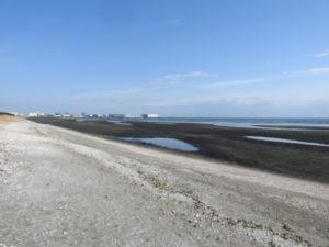 チュウシャクシギの生息地 ふなばし三番瀬海浜公園