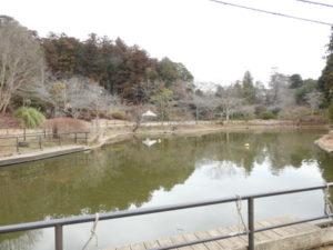 清水公園 アスレチックの池