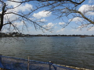 オナガの生息地 瓢湖