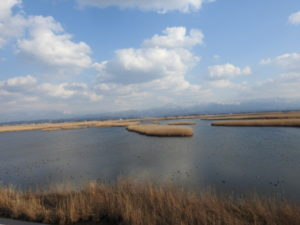 ミサゴの生息地 福島潟