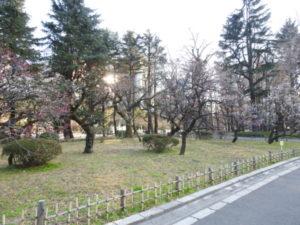 東京都 ツバメ 日比谷公園