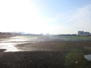ソリハシシギの生息地 谷津干潟