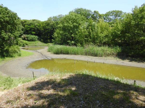 なぎさの森の池