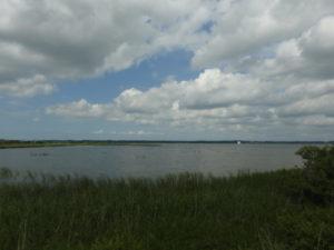セッカの生息地 北印旛沼
