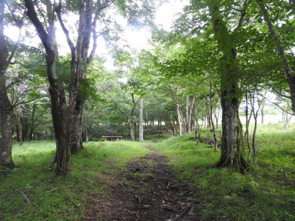 須山口登山歩道で見られる野鳥と観察ポイント