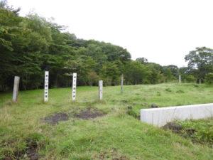 富士山須山口登山歩道 センダイムシクイ
