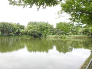 バンの生息地 浮間公園