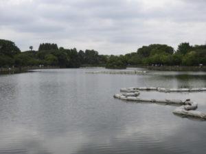 東京都 ツバメ 浮間公園