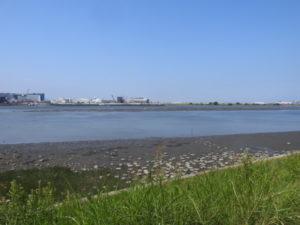 チュウシャクシギの生息地 多摩川河口付近