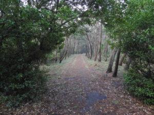 ヒヨドリの生息地と探す際のポイント 富津岬