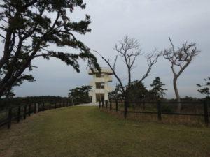 富津岬で見られる野鳥 中の島