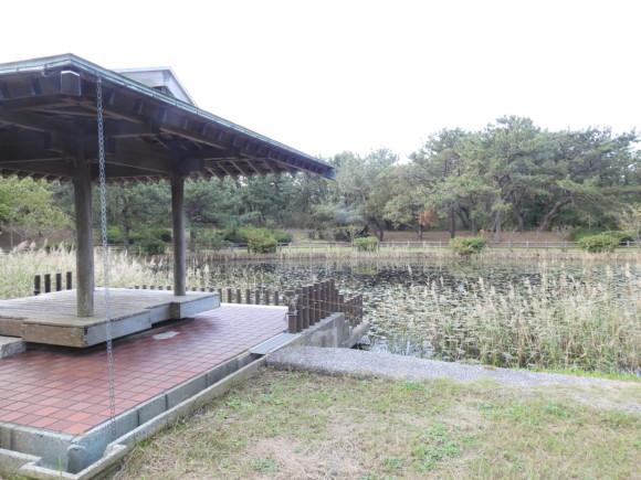 富津岬で見られる野鳥と観察ポイント
