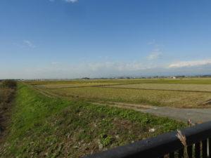 チョウゲンボウの生息地 板倉町の田園地帯