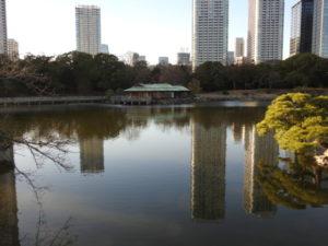 浜離宮恩賜庭園で見られる野鳥と観察ポイント 潮入の池