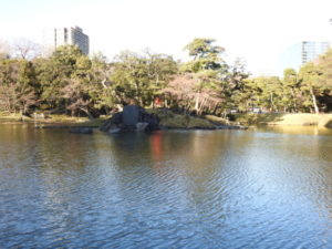東京都 コゲラ 小石川後楽園