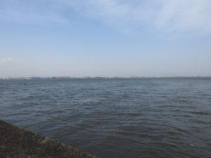 日の出海岸で見られる野鳥と観察ポイント 海上