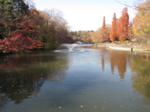 オナガの生息地 井の頭恩賜公園