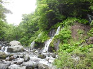 吐竜の滝 キビタキ