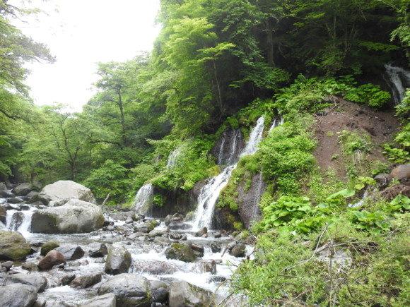 吐竜の滝で見られる野鳥と観察ポイント