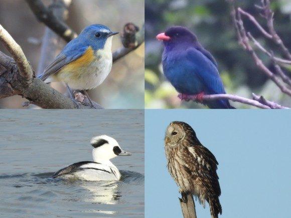 野鳥別生息地と探す際のポイント