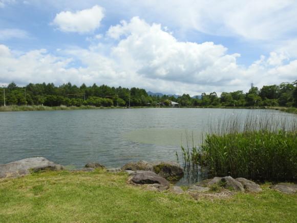八ヶ岳ふれあい公園で見られる野鳥と観察ポイント